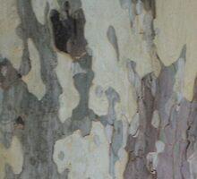 Plain Bark Provence  by Pontvert