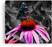 A stunning Admiral Butterfly Canvas Print