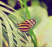 The butterfly counts not months but moments, and has time enough by Th3rd World Order