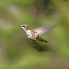 'Another Hummer' by Scott Bricker