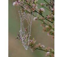 Morning Dew Drops Photographic Print