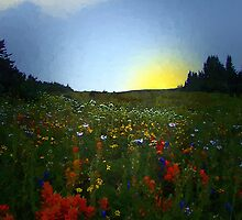 Sundown, Wildflower Meadow by RC deWinter