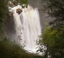 Hopetoun Falls 2 - Otways by Hans Kawitzki