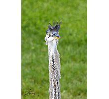 Great Blue Heron Aka Beeker Photographic Print