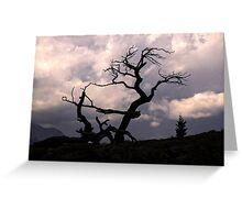 The Burmis Tree, Alberta Greeting Card
