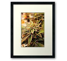 Purple Crush Framed Print
