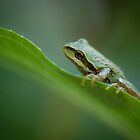 Frog on a Leaf by toby snelgrove  IPA