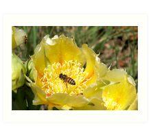Golden Nectar Art Print