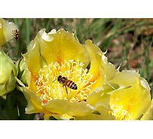 Golden Nectar Photographic Print