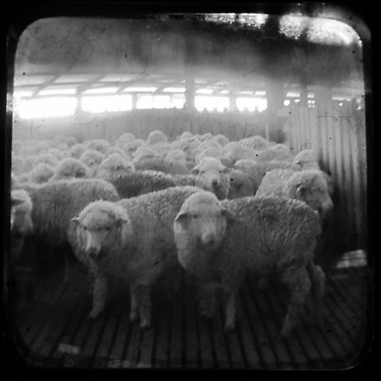 The Holding Pen - TTV by Kitsmumma