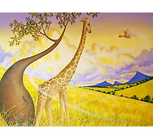Jeffery Giraffe Photographic Print