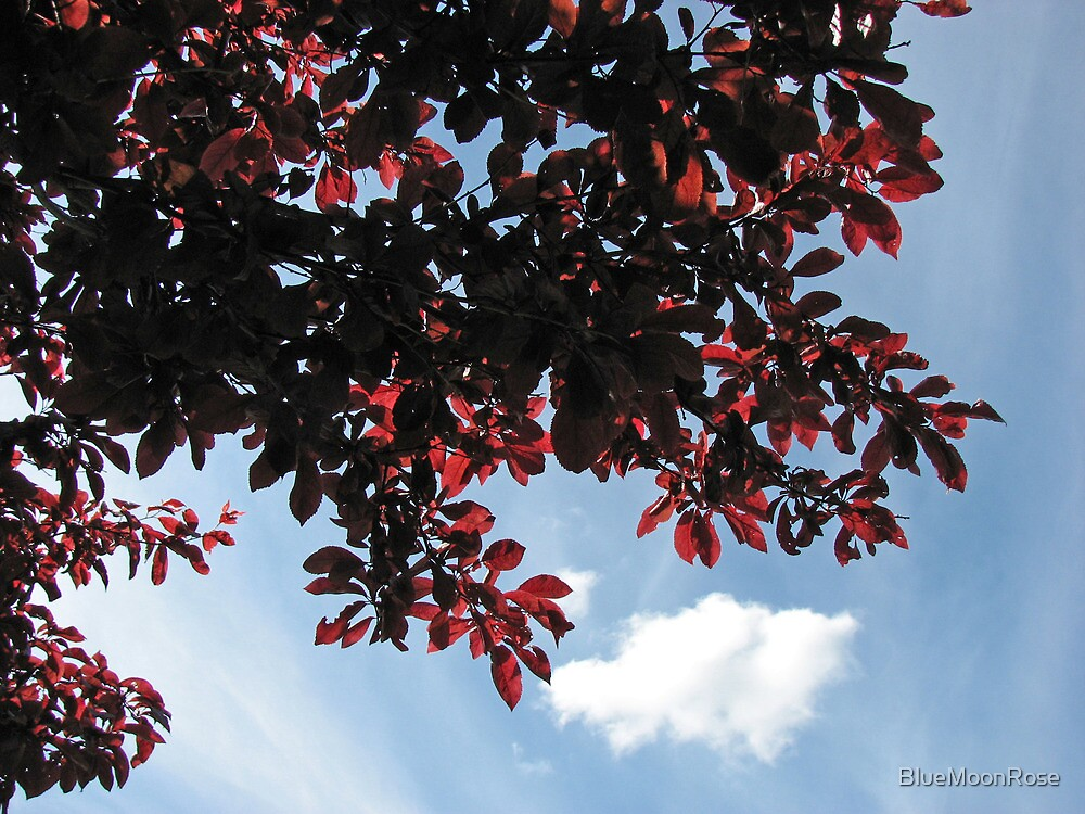 Beautiful Red Leaves against a Blue Summer Sky by BlueMoonRose