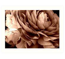 Blooming buttercup Art Print