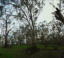 Camping in the forest, panorama, NSW by BigAndRed