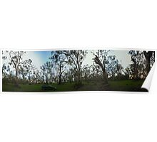 Camping in the forest, panorama, NSW Poster