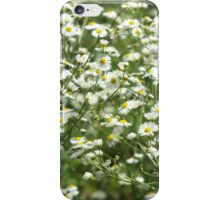Herbs on the lawn - camomile flowers iPhone Case/Skin