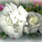 *Two gorgeous Iceberg Roses nestled together* by EdsMum