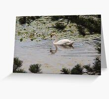 Majestic Swan Greeting Card