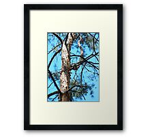 Detail of the trunk of a young pine tree  Framed Print