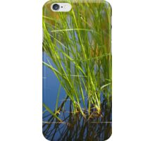 Water reeds growing out of the water iPhone Case/Skin