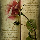 A Rose by Ann Garrett