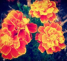 *Marigolds at Play* by EdsMum
