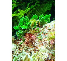 Coral at Rottnest,WA Photographic Print