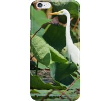 Mary River Egret  iPhone Case/Skin