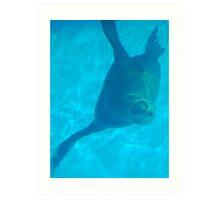 friendly sea lion  Art Print