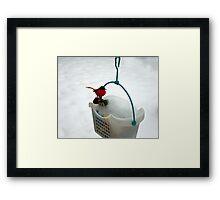 Snow Robin Framed Print