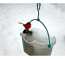 Snow Robin Photographic Print