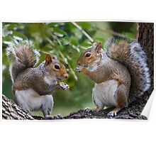 Squirrels Eating Poster