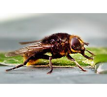 Sunfly  Photographic Print