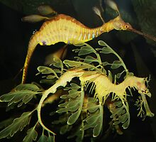 Sea Dragons by Paulette1021