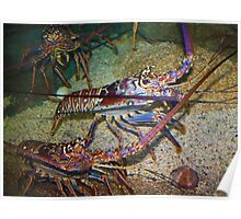 Colorful Lobsters Poster