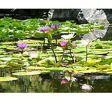 tranquil pond Photographic Print