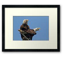 Eagle Parents Framed Print