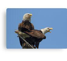Eagle Parents Canvas Print