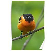 The Baltimore Oriole Look Poster