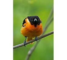 The Baltimore Oriole Look Photographic Print