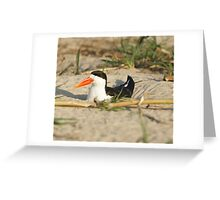 African Skimmer Greeting Card