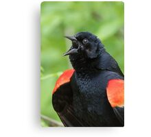 Red-Winged Black Bird Singing Canvas Print