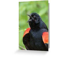 Red-Winged Black Bird Singing Greeting Card