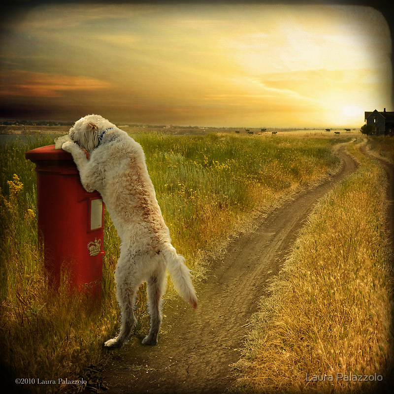 Take out the Mail, Molly...Good Dog by Laura Palazzolo