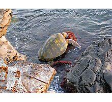 ~ Green Turtle ~ Photographic Print