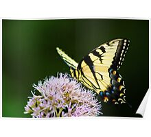 Tiger Swallowtail - Blue Ridge Mountains of Georgia Poster
