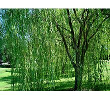 Under the Old Willow Tree- collaboration Photographic Print