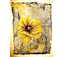 The Poppy Journals...The Document Photographic Print