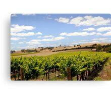 Australian Vineyard Landscape Canvas Print