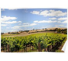 Australian Vineyard Landscape Poster